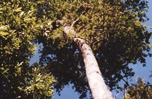 CBR-naturereserve-capeholly
