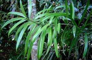 CBR-naturereserve-yellowwood