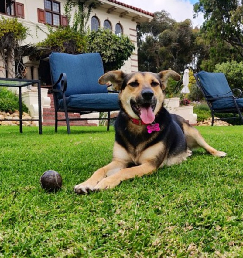 camps-bay-retreat-pet-friendly-bangers